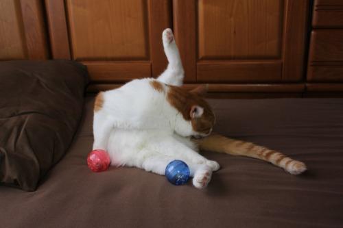ブログNo.351(おもちゃと猫)11