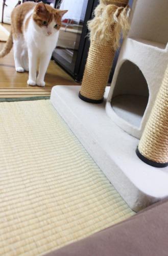 ブログNo.351(おもちゃと猫)13