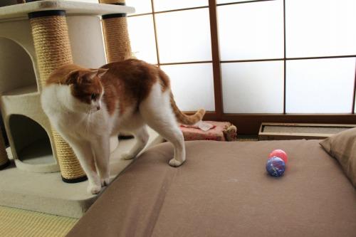 ブログNo.351(おもちゃと猫)15