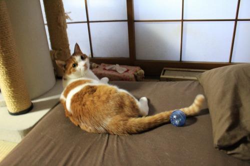 ブログNo.352(おまけ箱(おもちゃと猫続き))2