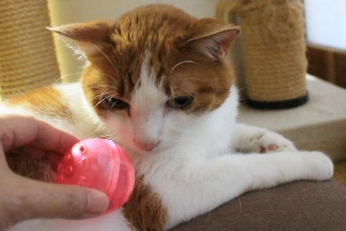 ブログNo.352(おまけ箱(おもちゃと猫続き))4