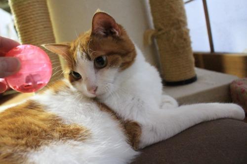 ブログNo.352(おまけ箱(おもちゃと猫続き))7