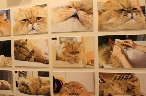 ブログNo.346(鼻提灯猫ちゃんの写真展)5