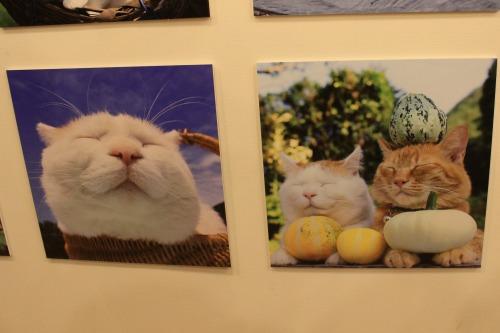 ブログNo.346(鼻提灯猫ちゃんの写真展)3