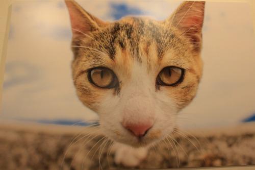 ブログNo.346(鼻提灯猫ちゃんの写真展)6