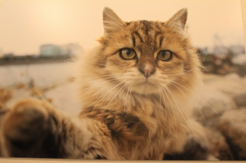 ブログNo.346(鼻提灯猫ちゃんの写真展)7