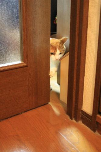 ブログNo.342(お出迎え猫)5
