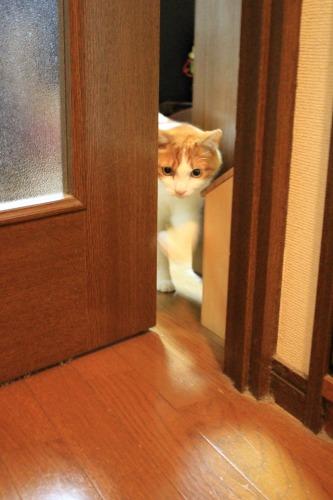 ブログNo.342(お出迎え猫)6