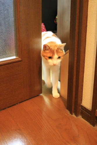 ブログNo.342(お出迎え猫)7