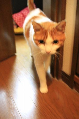 ブログNo.342(お出迎え猫)9