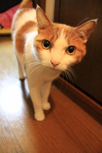 ブログNo.342(お出迎え猫)10