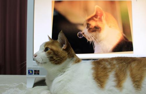 ブログNo.342(お出迎え猫)13
