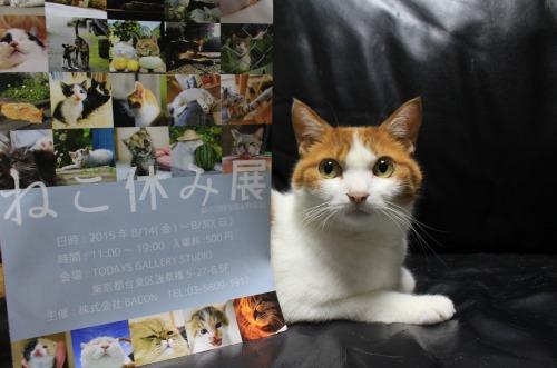 ブログNo.346(鼻提灯猫ちゃんの写真展)2