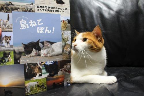 ブログNo.346(鼻提灯猫ちゃんの写真展)13