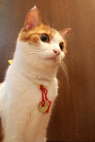 ブログNo.359(『猫侍』空之丞の続きの続き)1
