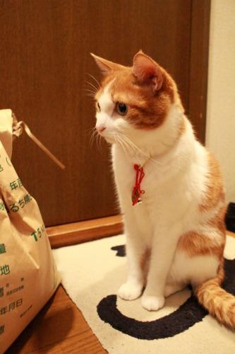 ブログNo.359(『猫侍』空之丞の続きの続き)11