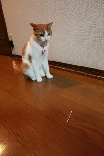 ブログNo.359(『猫侍』空之丞の続きの続き)7