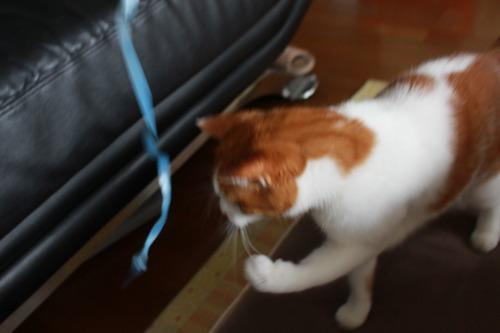 ブログNo.361(栗の紐ではしゃぐ猫)2