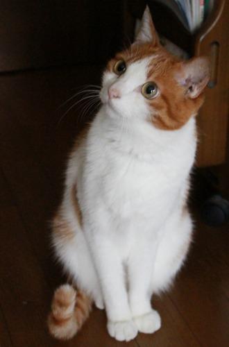 ブログNo.361(栗の紐ではしゃぐ猫)4