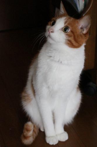 ブログNo.361(栗の紐ではしゃぐ猫)5