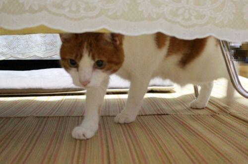 ブログNo.362(栗の紐ではしゃぐ猫の続き)3