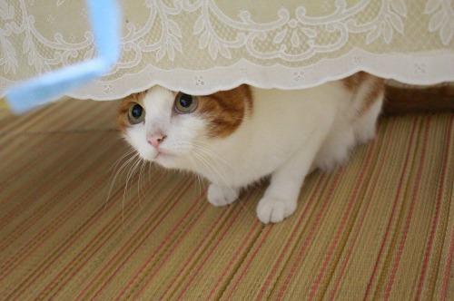 ブログNo.362(栗の紐ではしゃぐ猫の続き)5