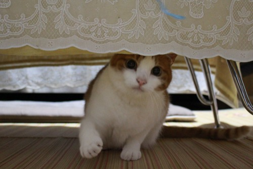 ブログNo.362(栗の紐ではしゃぐ猫の続き)7