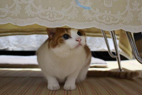 ブログNo.362(栗の紐ではしゃぐ猫の続き)8