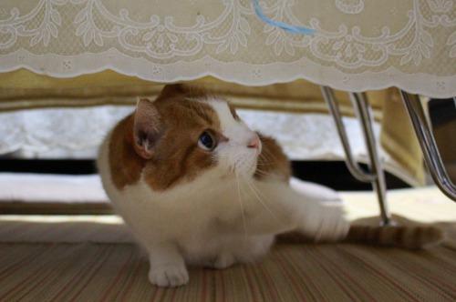 ブログNo.362(栗の紐ではしゃぐ猫の続き)9