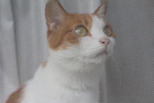 ブログNo.366(網戸猫)6