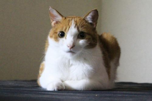 ブログNo.366(網戸猫)12