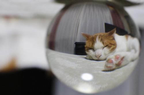 ブログNo.375(癒やしの猫写真集ぽん!)9