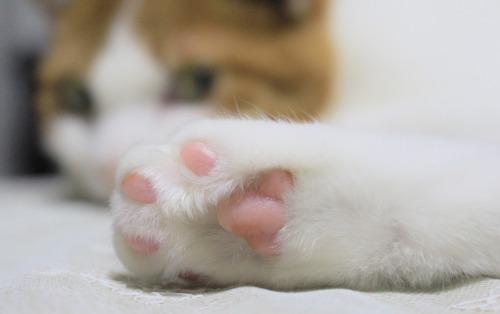 ブログNo.375(癒やしの猫写真集ぽん!)10