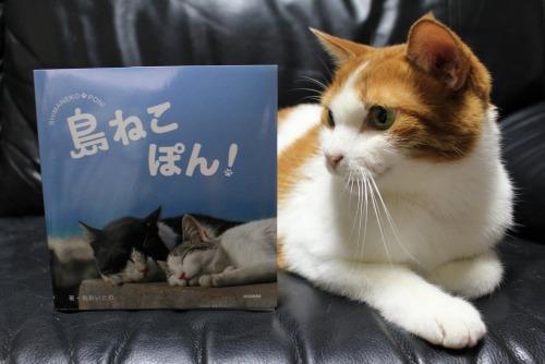 ブログNo.375(癒やしの猫写真集ぽん!)6