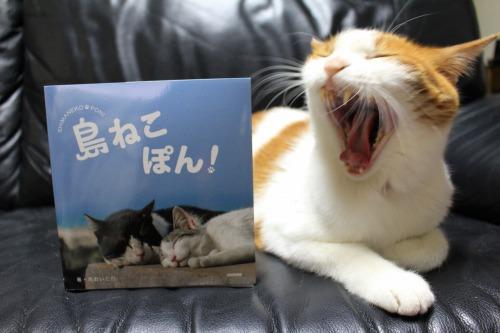 ブログNo.375(癒やしの猫写真集ぽん!)7