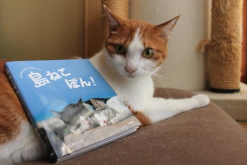 ブログNo.375(癒やしの猫写真集ぽん!)2
