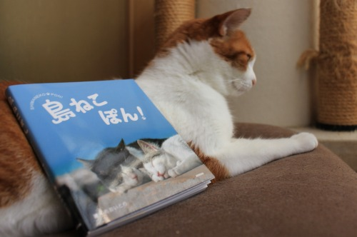ブログNo.375(癒やしの猫写真集ぽん!)3