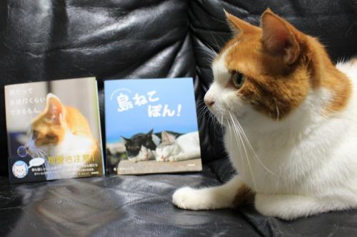 ブログNo.375(癒やしの猫写真集ぽん!)4