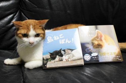 ブログNo.375(癒やしの猫写真集ぽん!)5