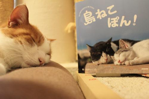 ブログNo.375(癒やしの猫写真集ぽん!)8