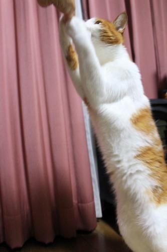 ブログNo.388(立ち食い猫)9