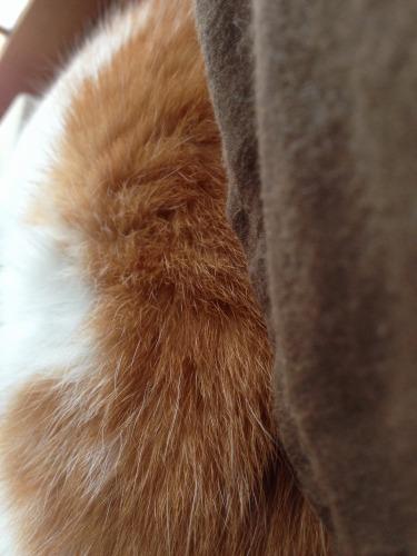 ブログNo.367(朝の猫と夜の猫)1
