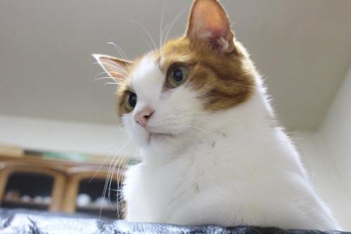 ブログNo.403(疲れきった猫&例の椅子)3