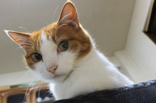 ブログNo.403(疲れきった猫&例の椅子)4