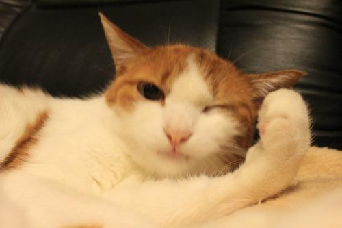 ブログNo.403(疲れきった猫&例の椅子)16