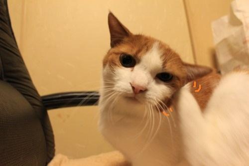 ブログNo.403(疲れきった猫&例の椅子)10