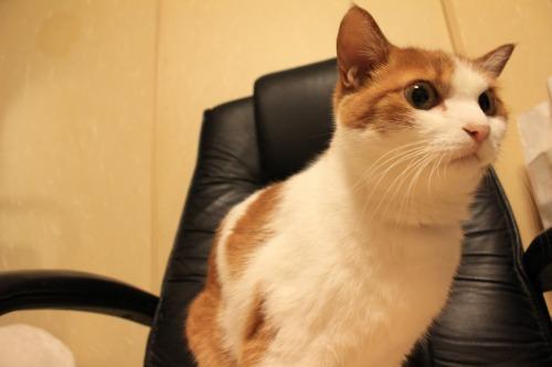 ブログNo.403(疲れきった猫&例の椅子)13
