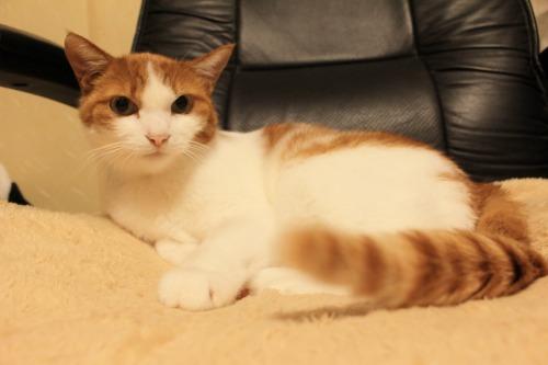 ブログNo.403(疲れきった猫&例の椅子)14
