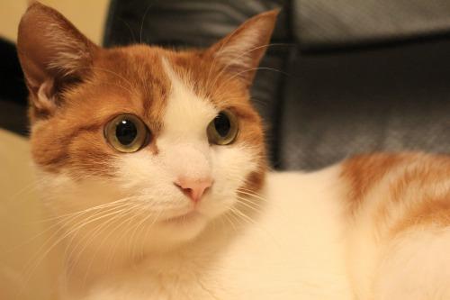 ブログNo.403(疲れきった猫&例の椅子)15