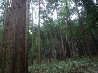 photo_randner_niiharunomori_aki_1017_12_2015_1017.jpg